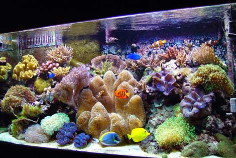 Salt Water Reef Tank
